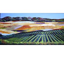 The Vineyard in a New Light Photographic Print