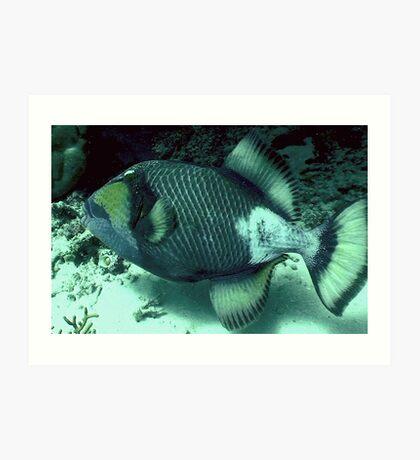 TRIGGER FISH  Art Print