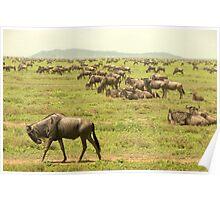 wildebeest of the Serengeti Poster