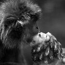 Monkey Kissing Lion by Vincent Teh