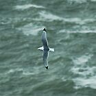 Kittiwake by VoluntaryRanger