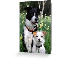 Dogs and Daffodil Gardens  Greeting Card