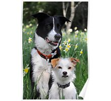 Dogs and Daffodil Gardens  Poster