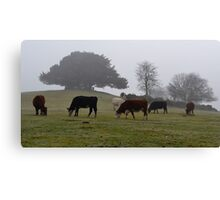 Foggy Morning at Boltons Bench  Canvas Print