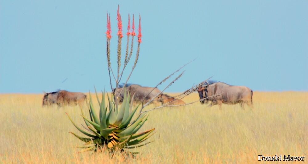 The Aloe and the Wilderbeeste by Donald  Mavor