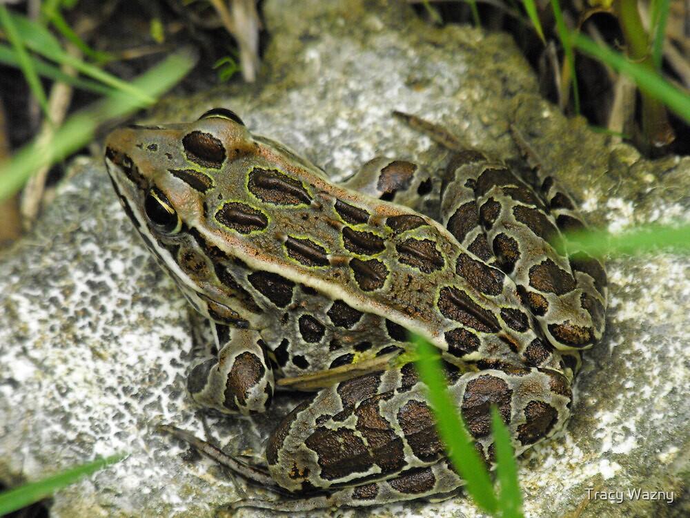 Leopard Frog by Tracy Wazny
