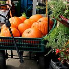 Don't Forget Your Pumpkins by Michael May
