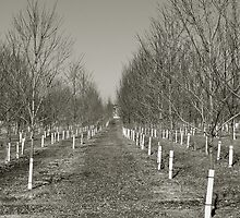 the Orchard by nastruck