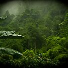 Deep in the jungle by Phil  Hatcher