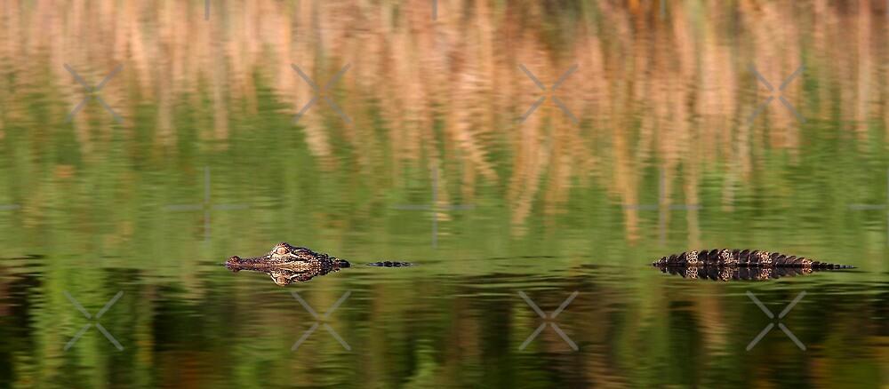 Big Gator by Jim Cumming
