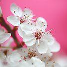 Confetti Blossom by Donna-R