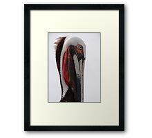 Portrait Of A Pelican - Retrato De Un Pelicano Framed Print