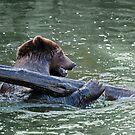 Bear by Vac1