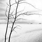 Alone by Keri Harrish