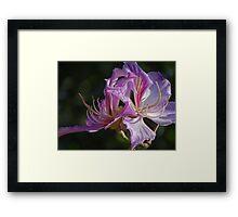 Natural Artwork II - Obra De Arte Natural Framed Print