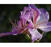 Natural Artwork II - Obra De Arte Natural Photographic Print