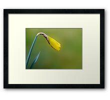 My first daffodil bud Framed Print