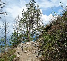 Weathered Tree by Leslie Belmonti