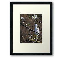 White Blossoms - Flores Blancas Framed Print