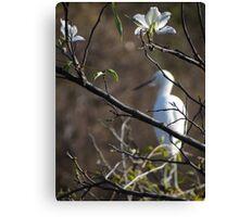 White Blossoms - Flores Blancas Canvas Print