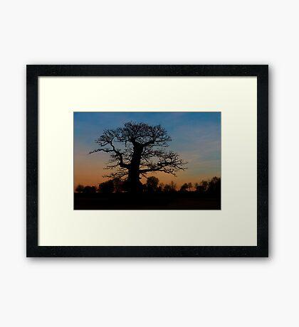 Oak Silhoette Framed Print