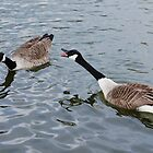 Geese on the lake by flashcompact