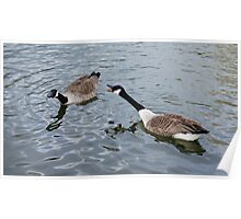 Geese on the lake Poster