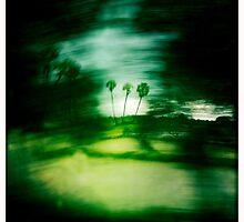 palm by Alexis Santi