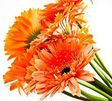 Orange Gerberas by Janette Anderson