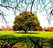 Greenwich Park - Trees & Branches by rsangsterkelly
