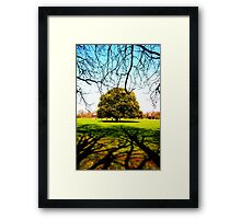 Greenwich Park - Trees & Branches Framed Print