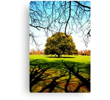 Greenwich Park - Trees & Branches Canvas Print