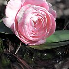 Rose in water by Bethany Thomas