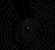 Spider's web by Henri Koskinen
