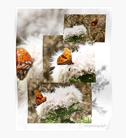 White flowering weed with Gulf Fritillary Poster