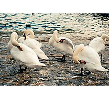 Lake Zurich Swans Photographic Print