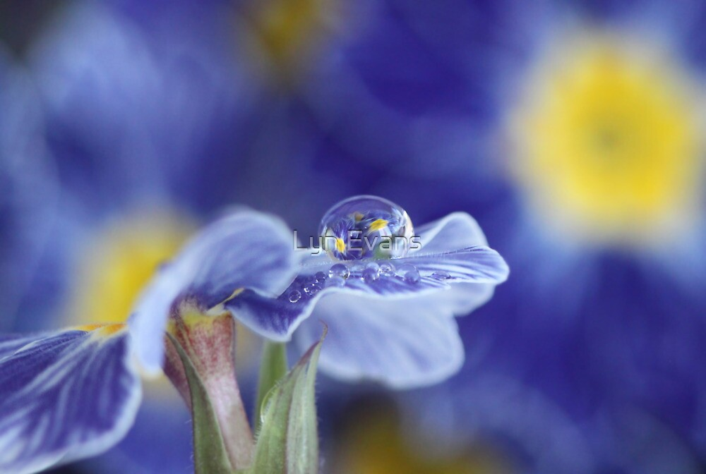 Blue reflections by Lyn Evans
