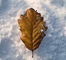 Autumn Fall on Snow Fall by Paul Barnett