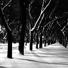 Snow Park by dgscotland