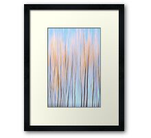 Autumn colours of a willow Framed Print