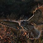 Eagle Owl by Phiggys