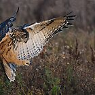 """Eagle Owl """"In for the kill"""" by Phiggys"""