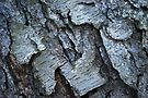 Bark Formations by Laurie Minor