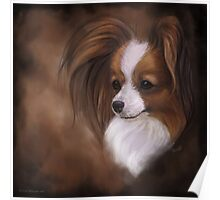 Papillon Red Sable and White Poster