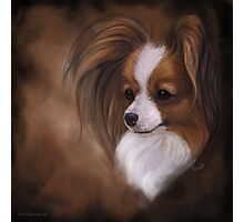 Papillon Red Sable and White Photographic Print