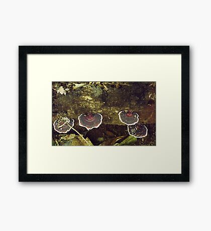 Brown and Red Fungus Framed Print