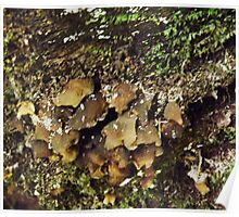 Brown Fungus Poster