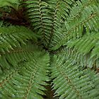Fern Center by Bearfoote