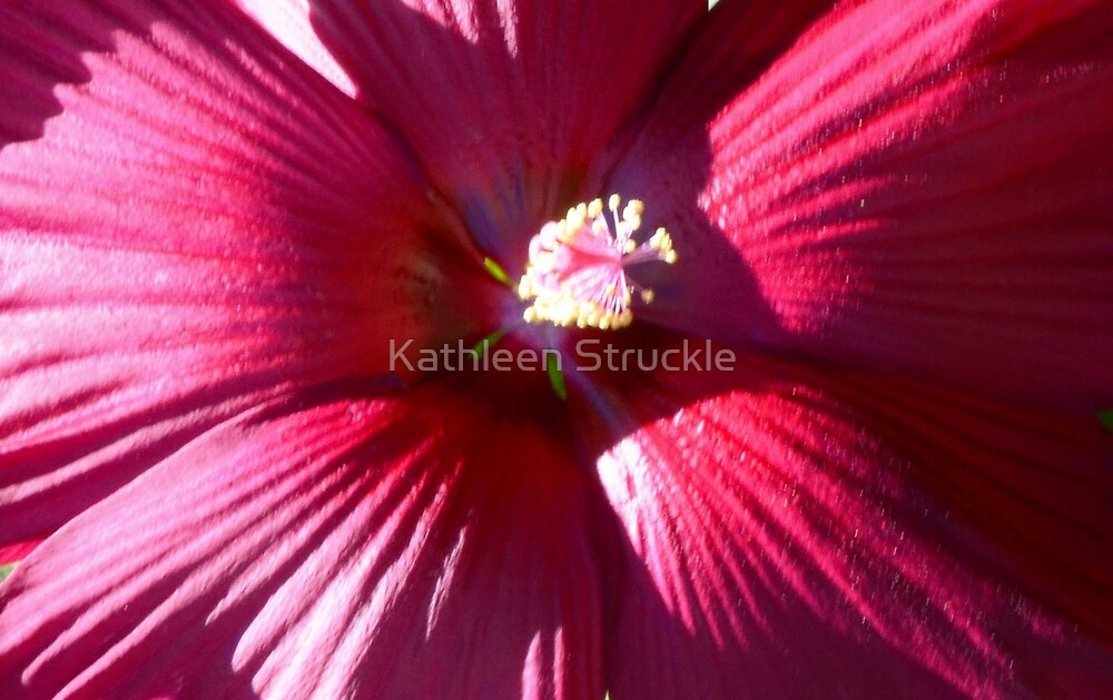Red Hibiscus by Kathleen Struckle