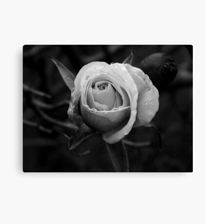 Black and White Bloom Canvas Print